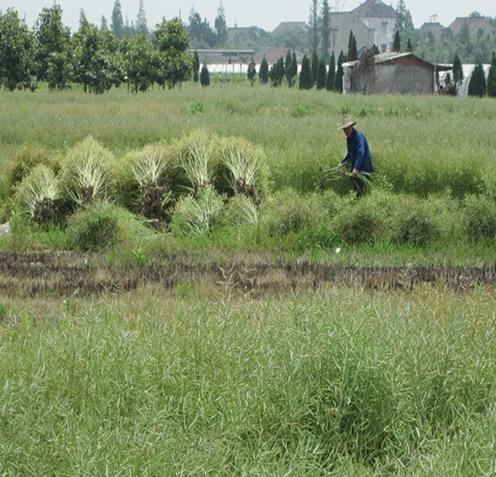 2012年ASLA奖分析与规划奖都市里的农业小镇_12