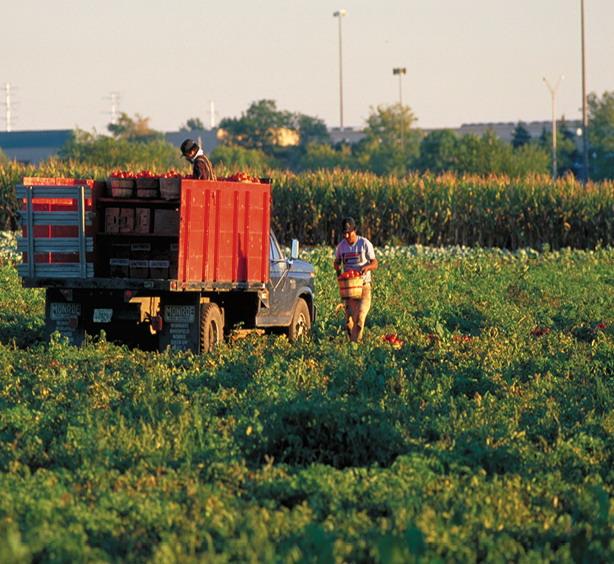 2012年ASLA奖分析与规划奖都市里的农业小镇_20