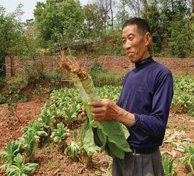 2012年ASLA奖分析与规划奖都市里的农业小镇_21