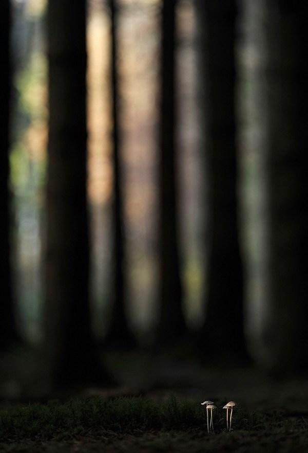 2012年全球年度园林摄影师奖第8张图片