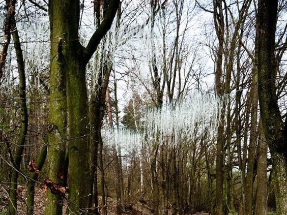 学生项目-森林景观装置第1张图片