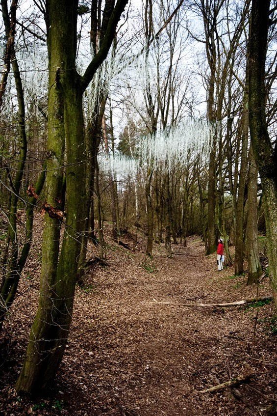 学生项目-森林景观装置第2张图片