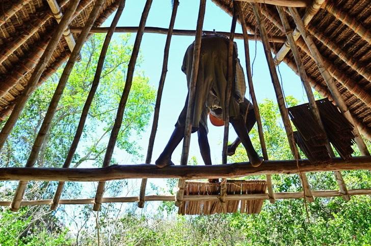肯尼亚树屋第11张图片