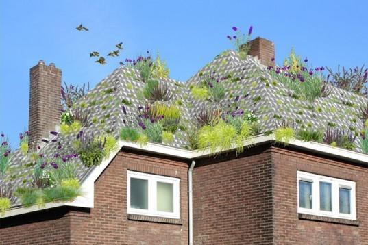 英国新屋顶花园