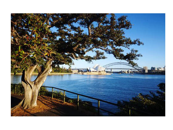 悉尼皇家植物园发展规划
