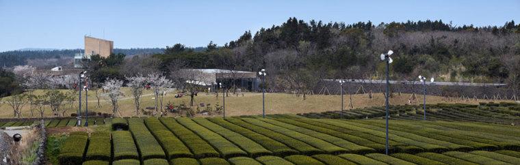 济州岛茶石博物馆及茶室-济州岛茶石博物馆及茶室第16张图片