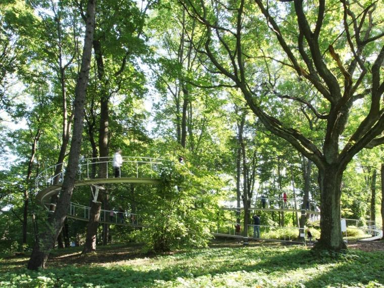 爱沙尼亚在森林之中的小道景观