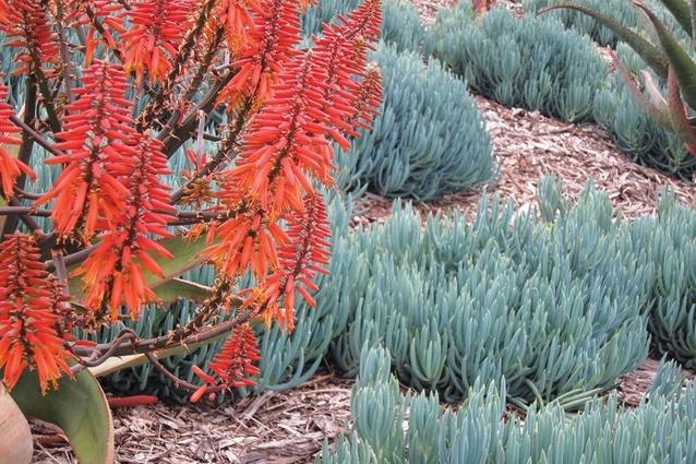 伊丽莎山花园外部局部实景图-伊丽莎山花园第7张图片