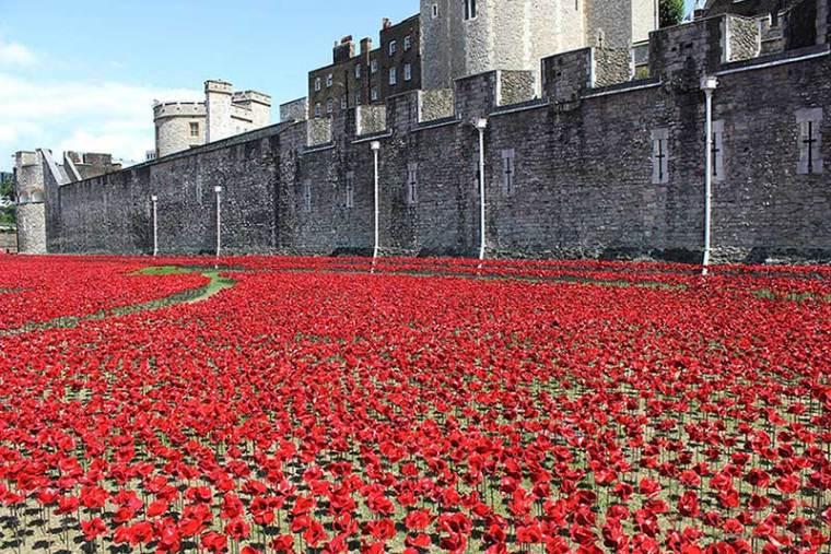 英国伦敦塔的红色罂粟花海外部局-英国伦敦塔的红色罂粟花海第8张图片