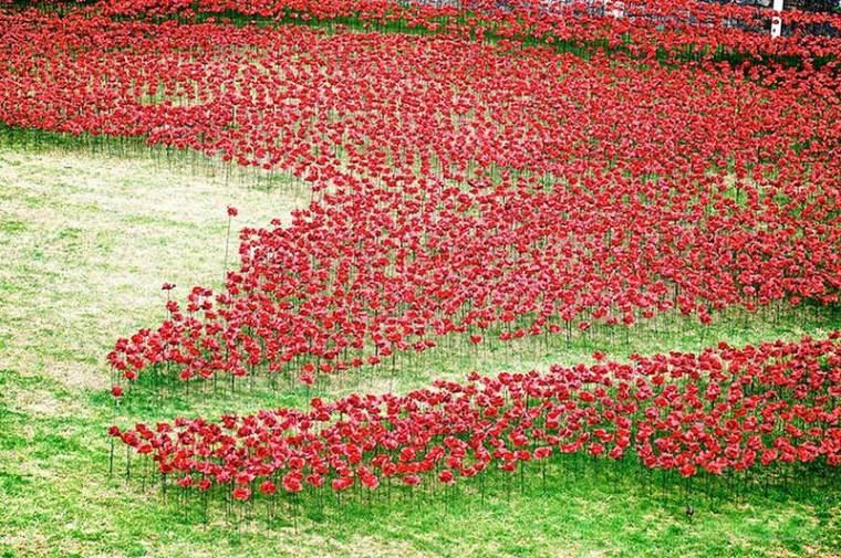 英国伦敦塔的红色罂粟花海外部细-英国伦敦塔的红色罂粟花海第12张图片