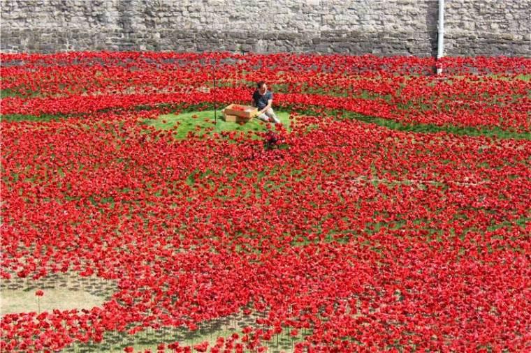 英国伦敦塔的红色罂粟花海外部细-英国伦敦塔的红色罂粟花海第13张图片