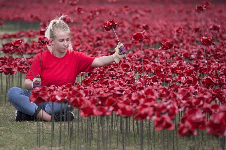 英国伦敦塔的红色罂粟花海外部细-英国伦敦塔的红色罂粟花海第15张图片