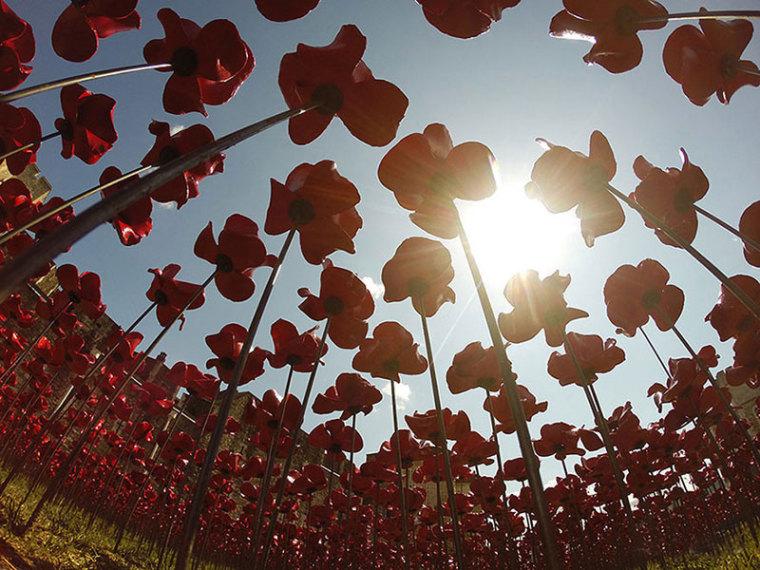 英国伦敦塔的红色罂粟花海外部细-英国伦敦塔的红色罂粟花海第16张图片