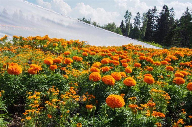 加拿大盛大梅蒂斯国际花园节外部-加拿大盛大梅蒂斯国际花园节第13张图片