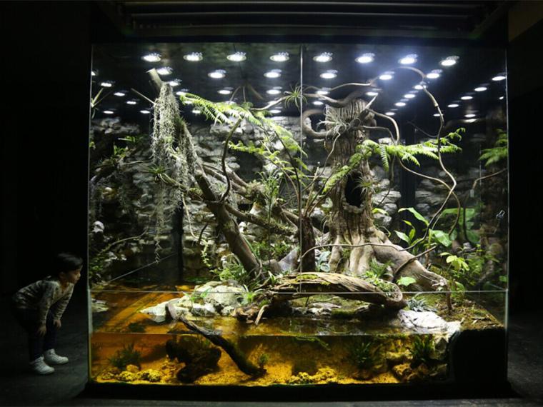 大型人造热带雨林生态景观