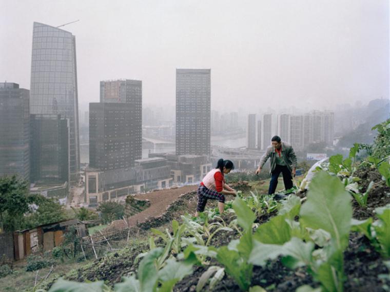 中国新城市农场