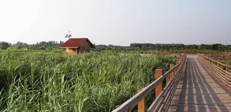 济宁微山湖湿地公园
