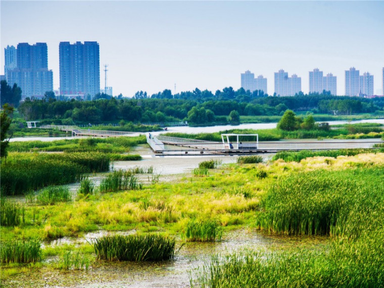 哈尔滨文化中心湿地公园