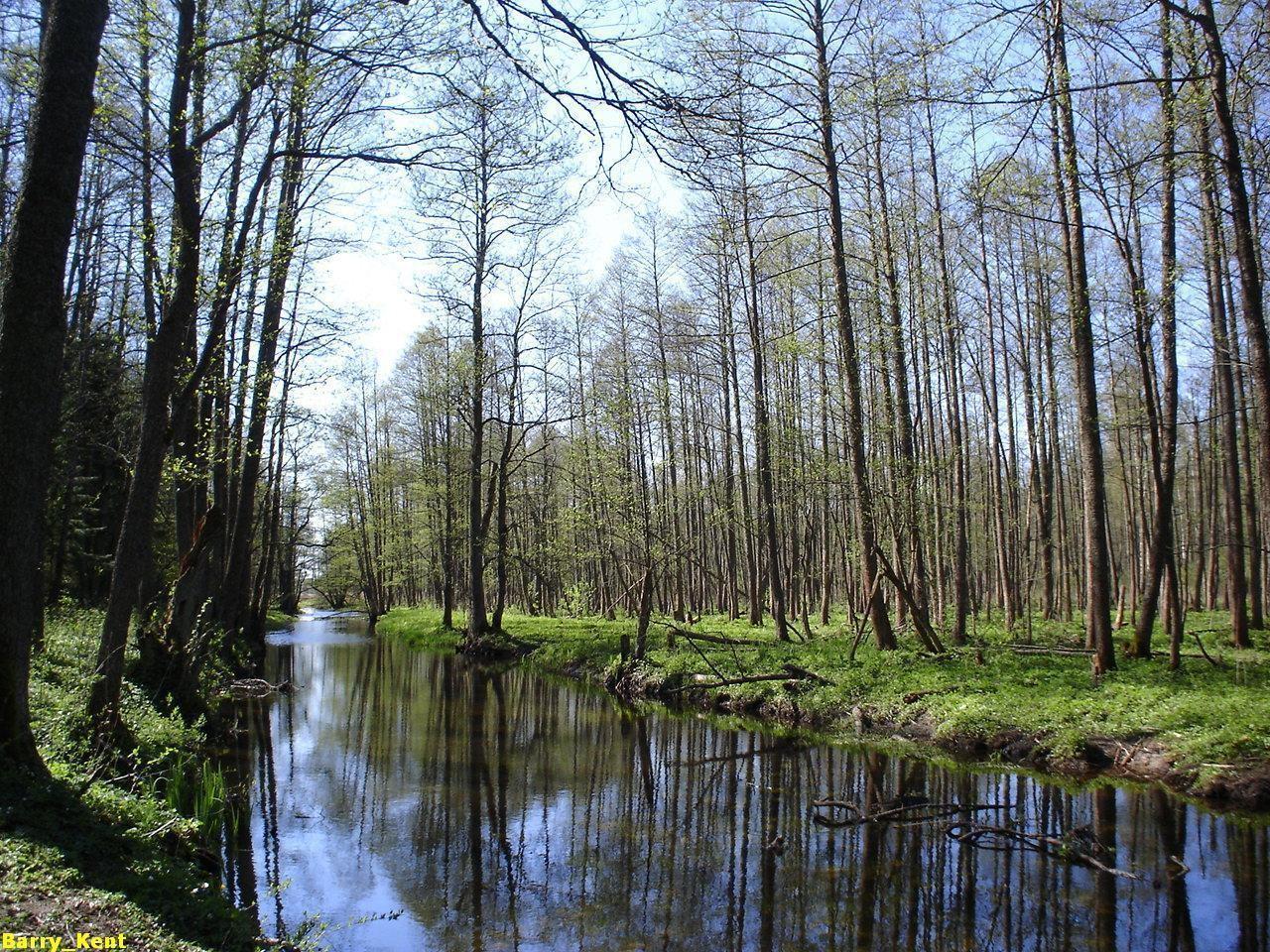 俄罗斯比亚沃维耶扎国家公园