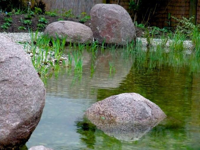 生态池塘之一