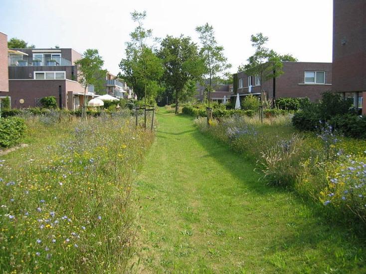 Egelshoek平原景观