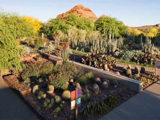 美国沙漠植物园第1张图片