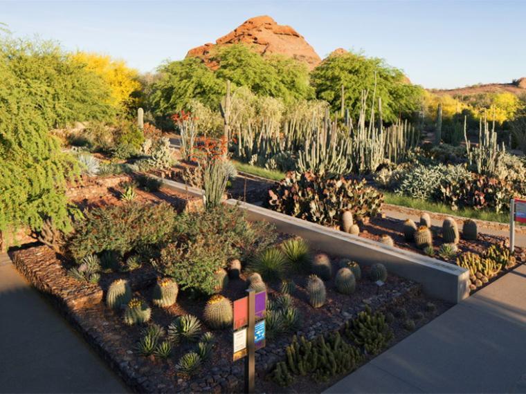 美国沙漠植物园