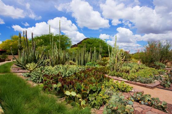 美国沙漠植物园外部实景图-美国沙漠植物园第2张图片
