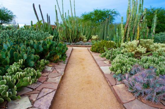 美国沙漠植物园外部实景图-美国沙漠植物园第6张图片