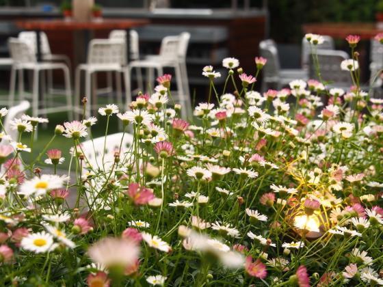 英国Kings街道咖啡馆庭院改造外部-英国Kings街道咖啡馆庭院改造第6张图片