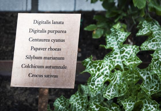 瑞士诺华制药公司药用植物园外部-瑞士诺华制药公司药用植物园第14张图片