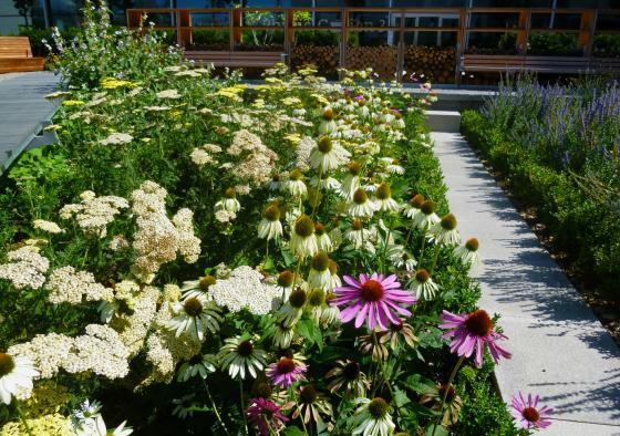瑞士诺华制药公司药用植物园外部-瑞士诺华制药公司药用植物园第16张图片