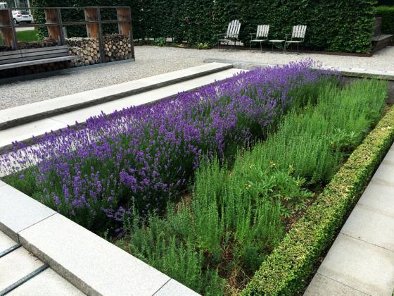 瑞士诺华制药公司药用植物园外部-瑞士诺华制药公司药用植物园第18张图片