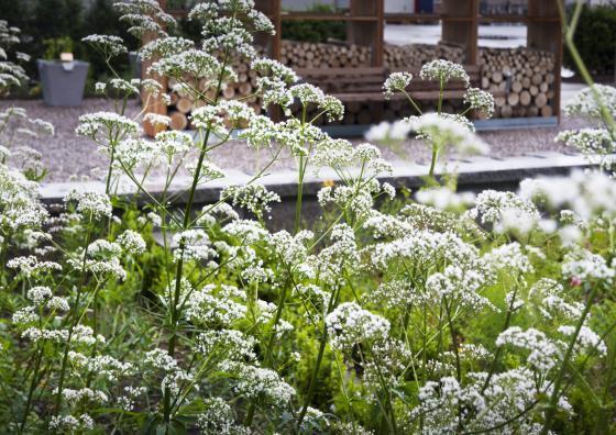 瑞士诺华制药公司药用植物园外部-瑞士诺华制药公司药用植物园第20张图片