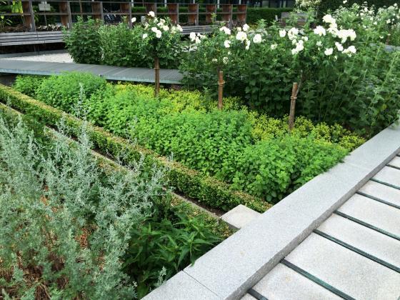 瑞士诺华制药公司药用植物园外部-瑞士诺华制药公司药用植物园第23张图片