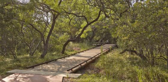 美国Hardberger公园外部实景图-美国Hardberger公园第10张图片