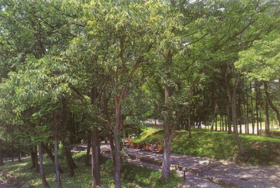 上海古城公园规划外部实景图-上海古城公园规划第8张图片