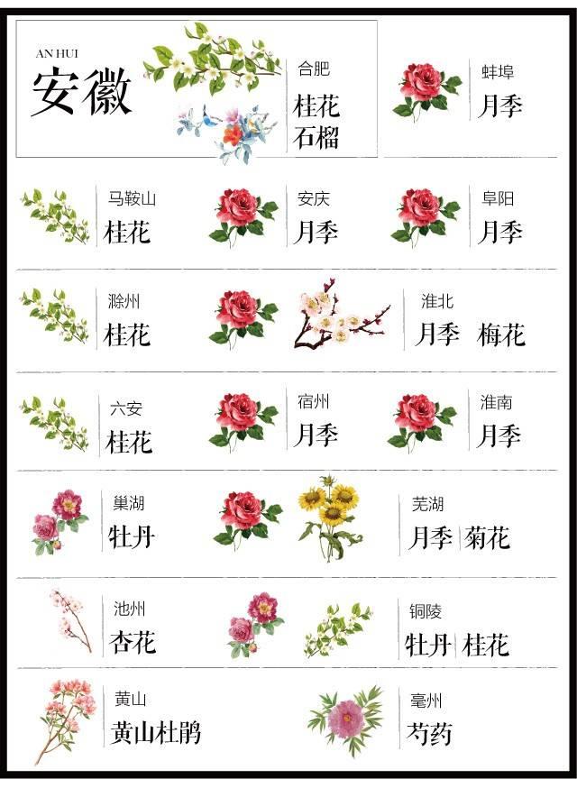 204个城市·史上最全中国各城市市花_13