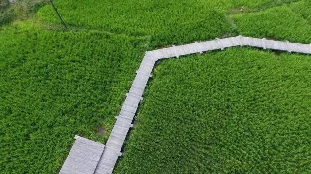 农田,才是最奢华的风景_18