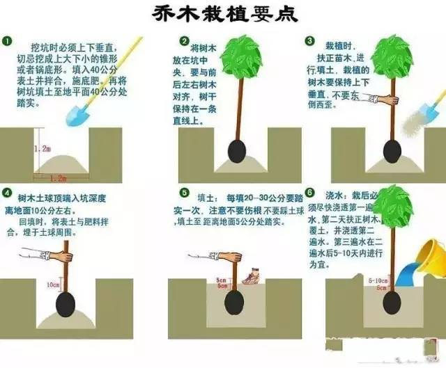 园林植物绿化18问,超实用!!
