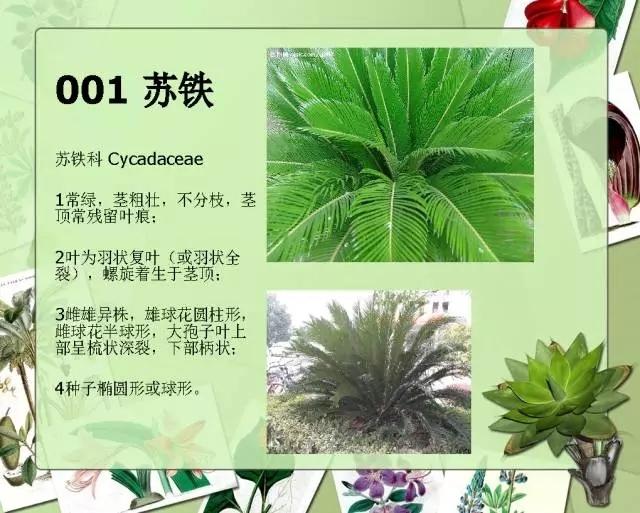 100种常见园林植物图鉴-20160523_183224_001.jpg