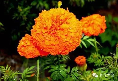 100种· 常见花卉的播种栽培大全,送给爱养花的你