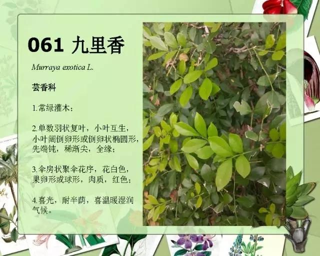 100种常见园林植物图鉴-20160523_183224_066.jpg
