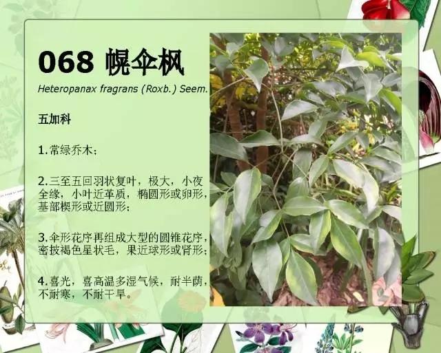 100种常见园林植物图鉴-20160523_183224_080.jpg