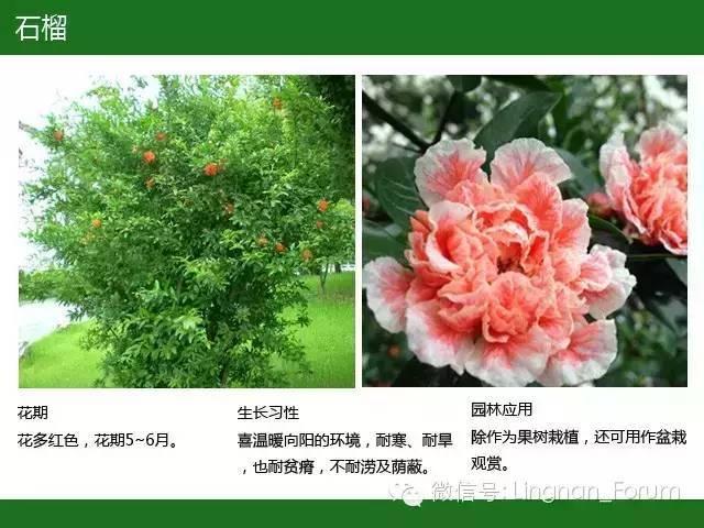 全国七大片区,常用开花植物集锦(下)