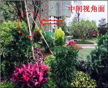 景观植物配置葵花宝典_86