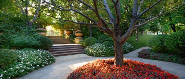 干货|园林设计需要用到的景观树知识大全