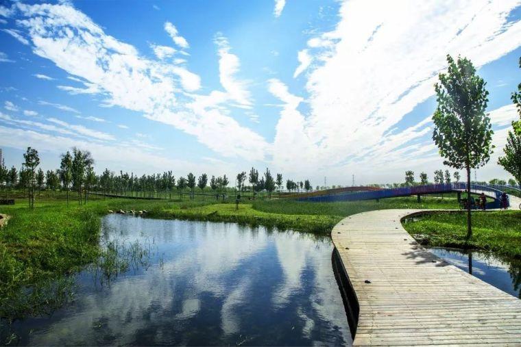 案例 渭柳湿地公园_6