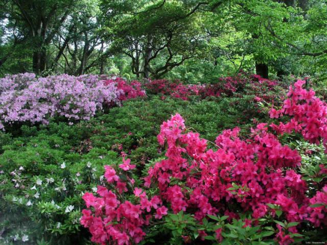 外国的园林艺术一定要看!_23
