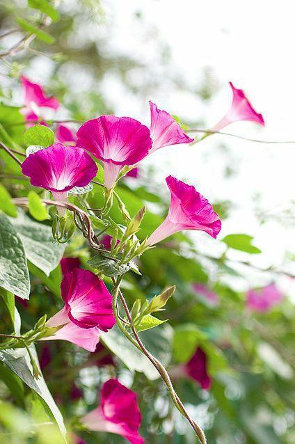 如何用植物装点你的园林景观!_8